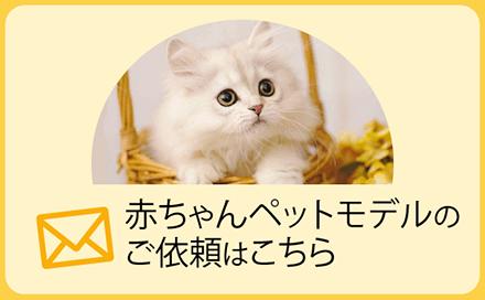 赤ちゃんペットモデルのご依頼はこちら